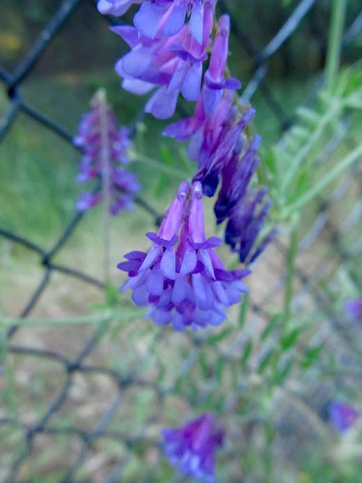 Violet Still